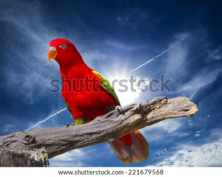close up shot on eye of red parrot bird, outdoor shot - stock photo