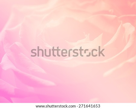 close-up single rose backgrounds soft color