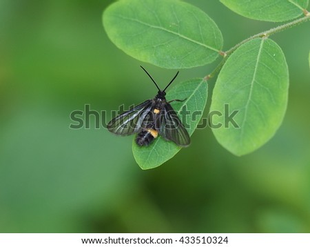 close up small garden insect perched on small green leaf - stock photo