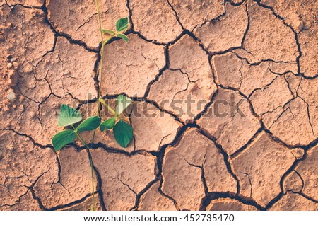 Close up small green plant on dry crack soil texture background. Copy space of environment global warming concept. Vintage tone filter color style.