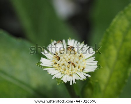 close up small red ant eating nectar from tiny grass flower. - stock photo