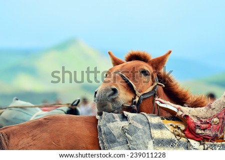 close up smile face of donkey on bag pack at mountain - stock photo