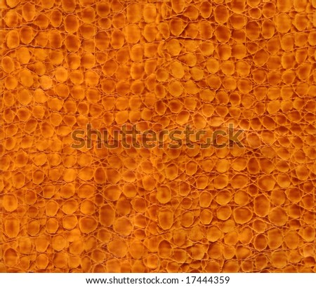 Close-up snake leather texture to background - stock photo