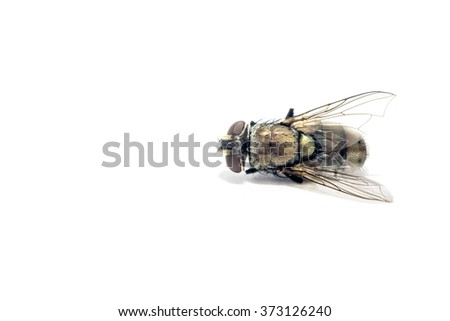 close up soft focus dead flies on isolated background - stock photo