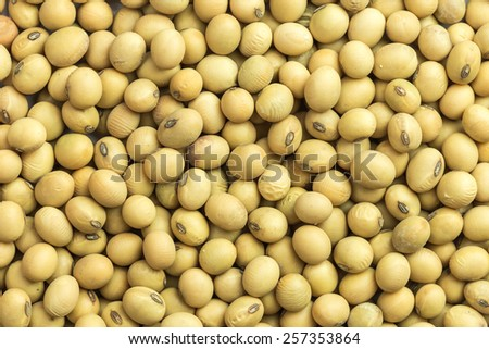 Close up soybeans for background - stock photo