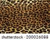 Close up spots pattern of a leopard - stock photo