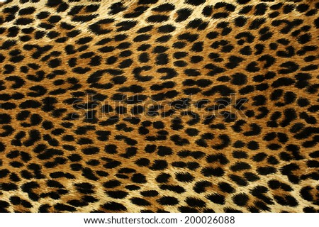Close up spots pattern of a leopard - stock photo