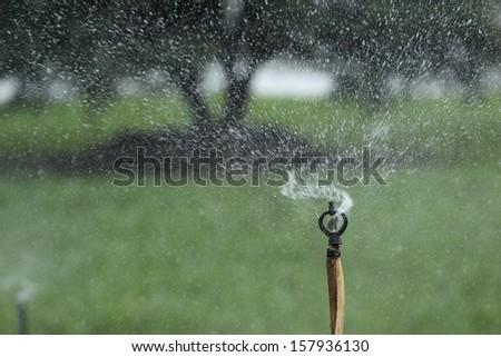 close up sprinkler - stock photo