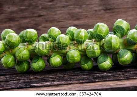 close up Sprouts on the stalk. - stock photo