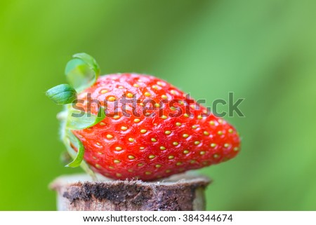 close up strawberry on green background