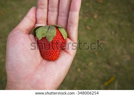 Close up strawberry  on hand , Selective focus . - stock photo