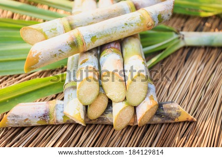 Close up Sugarcane - stock photo