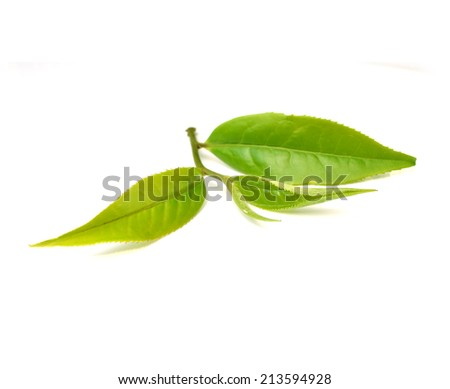Close up tea leaves on white background - stock photo