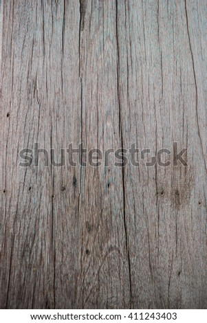 Close up texture of bark wood use as natural background