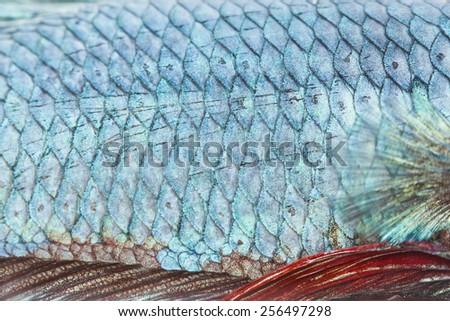 close up texture of fight fish - stock photo