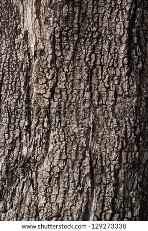 Close up texture of fracture on the tree bark. - stock photo