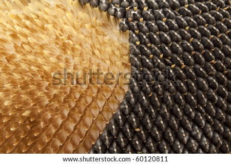 Close up texture of sunflower seeds - stock photo