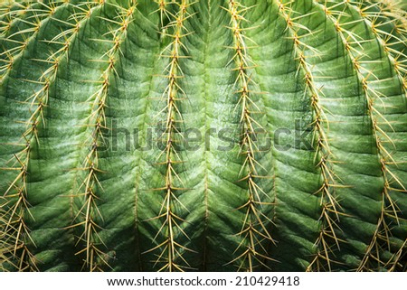 close up textured of cactus plant - stock photo
