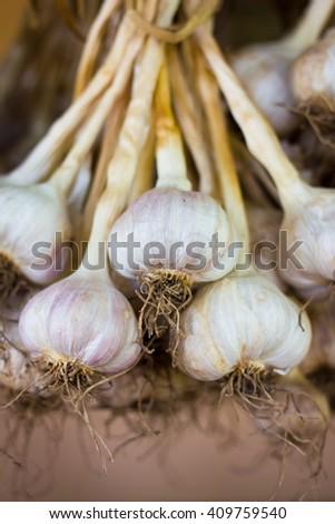 Close-up thai garlic bulbs and garlic cloves on background - stock photo