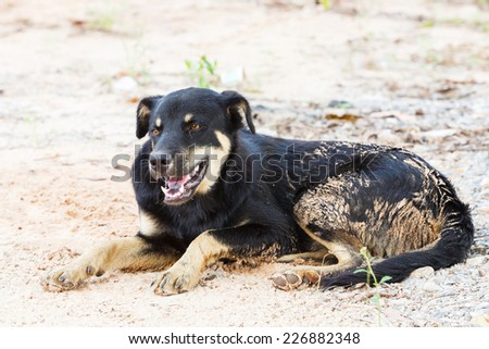 Close up Thai stray dog lying on dirty sandy floor - stock photo