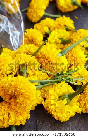 close up thai yellow flower in thailand - stock photo