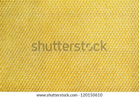 Close up the Honeycomb structure - stock photo
