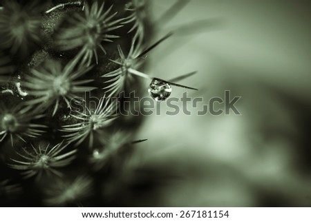close-up thorn of cactus with dew drop,vintage color tone. - stock photo