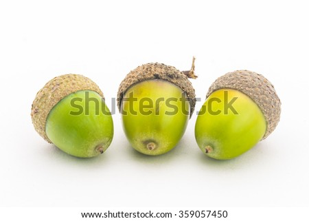 Close up three green oak seed isolated on white - stock photo