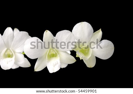 Close up three white orchid