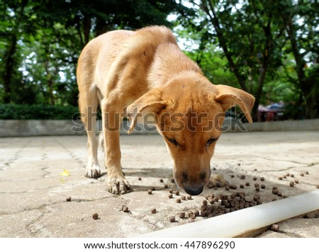 Close up to a homeless dirty brown dog eating fish food. Selective focus to its nose.                                - stock photo