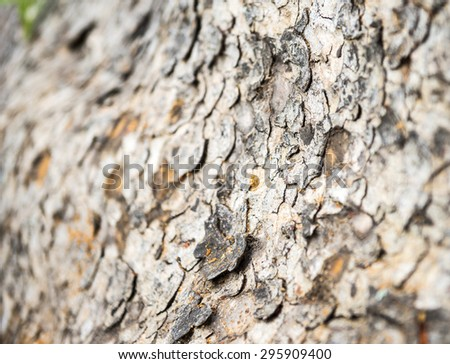 Close up tree bark - stock photo