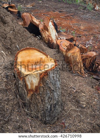 Close up tree stumps that were left from the destruction of the environment and deforestation for use in agriculture. - stock photo