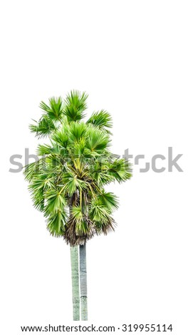 Close up Twin palm tree on white background.This has clipping path. - stock photo