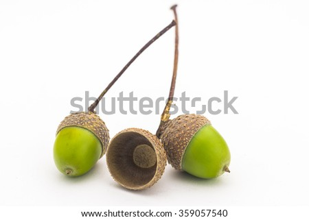 Close up two green oak seed with small branch and empty hat isolated on white - stock photo