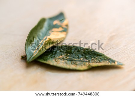Close up two green tangerine leaves