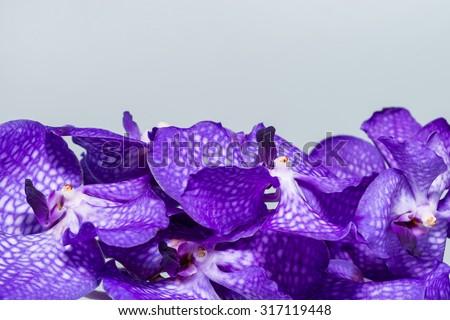 close-up Vanda Orchid Wanda - Queen of orchids, purple flower - stock photo