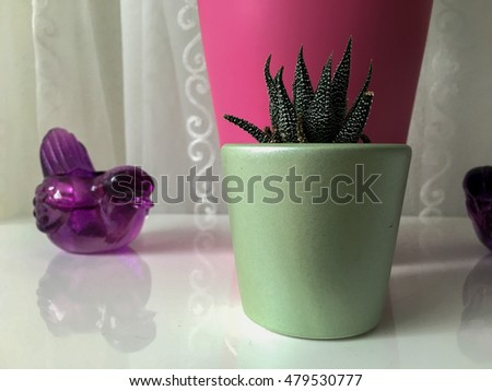 Close-up view from the front of a cactus and candlesticks