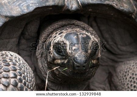 Close up view Green Sea Turtle on the beach - stock photo