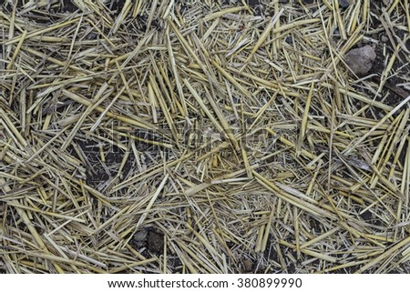 Close up view hay texture background