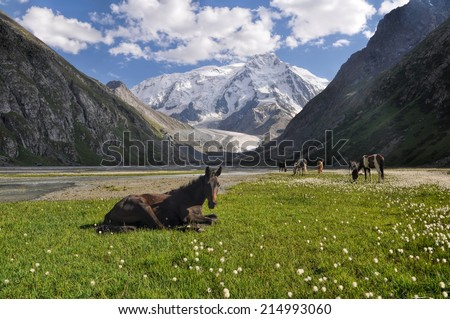 Close-up view of a horse lying near Issyk-Kul lake with the herd in the background - stock photo