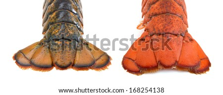 Close up view of a live lobster tail isolated on a white background  - stock photo