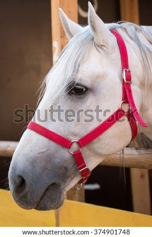 Close up view of a white horse on a stable. - stock photo