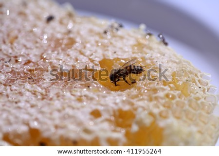 Close up view of a Wild Honey Bee Honey Comb filled with wild honey. Only bees make honey something that mankind has never been able to reproduce.  - stock photo