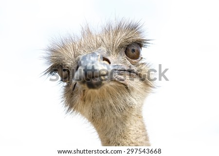 Close up view of an ostrich bird head - stock photo