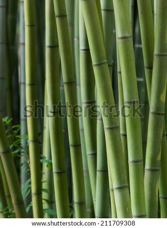 close up view of bamboo trunks