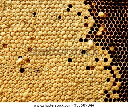 Close up view of bees,bee larva on honey cells. - stock photo
