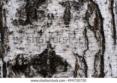 Close up view of birch bark for background texture.