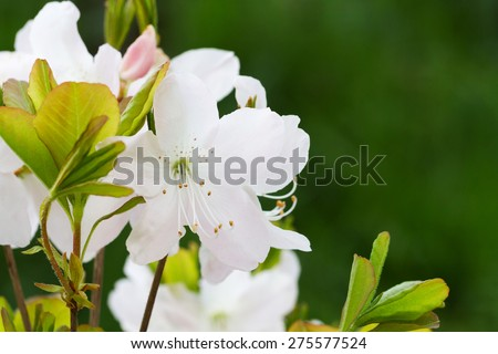 Close-up view of blooming apple tree flowers in botanical garden