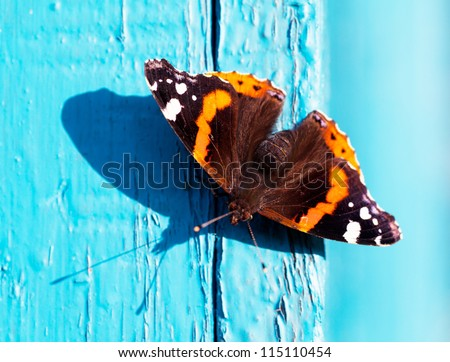 Close up view of butterfly on a blue wooden planks - stock photo