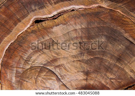 Close up view of cross section of tree trunk showing growth rings. Section of the trunk with annual rings for the background. Background texture of natural wood.